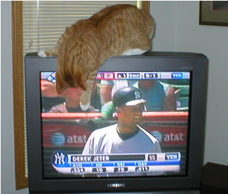 Jeter the cat meets Jeter the ballplayer
