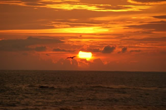 Brown Pelican and Sunset over the Pacific Ocean